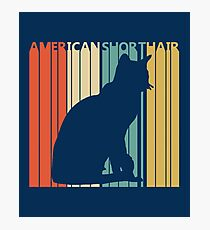 American Shorthair Cat Photographic Print