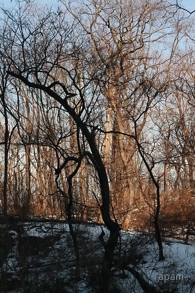 NYC trees by apam