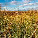 Looking through the autumn grass by Chris Warham