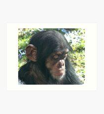 Baby chimp at Taronga Zoo Art Print