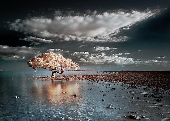King Island by Ben Ryan