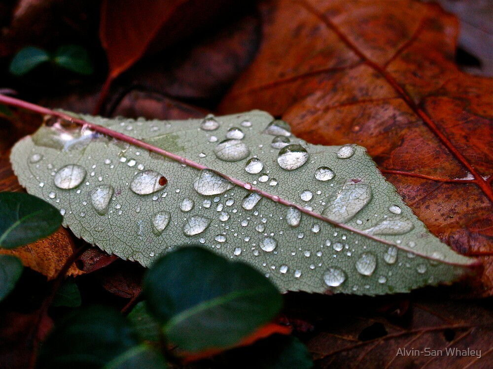 After The Rain by Alvin C Whaley
