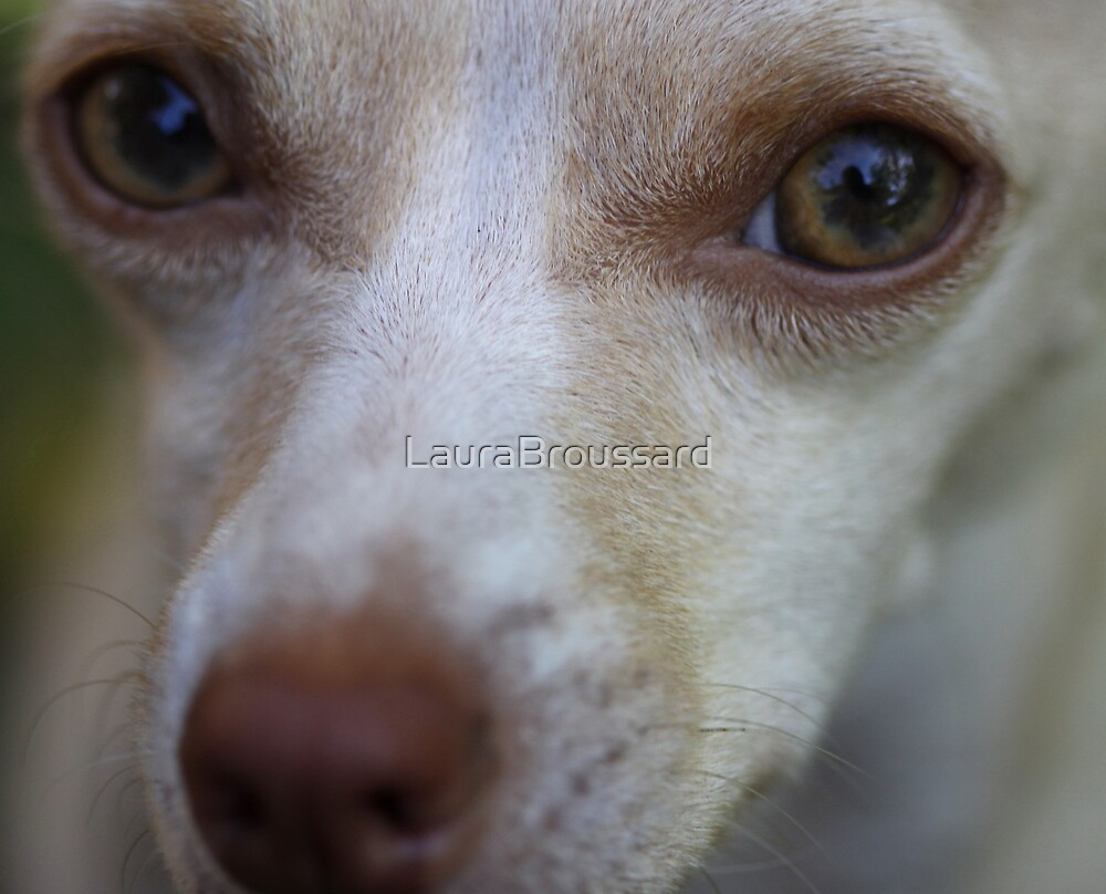 Sam, I Am !!! by LauraBroussard