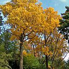Autumn Colors NJ (Fall 2009) by Monica Engeler