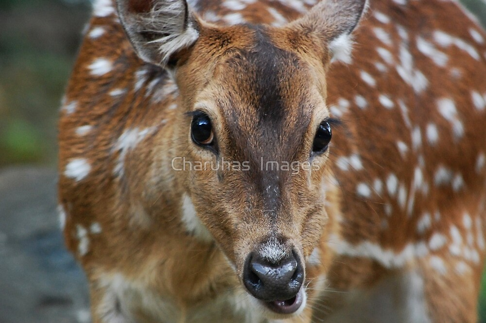 Hi Friend by Charuhas  Images