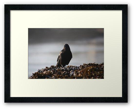 Contemplative Crow by jennem