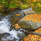 Autumn Symphony by Nancy Barrett