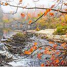 Beaver Dam by Nancy Barrett