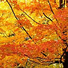 Maple Majesty by Nancy Barrett