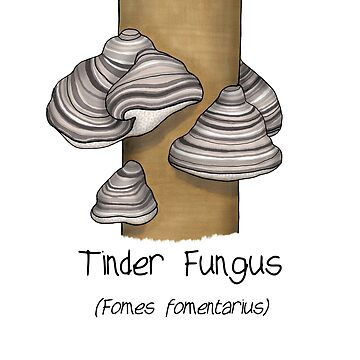 Tinder Fungus by Immy