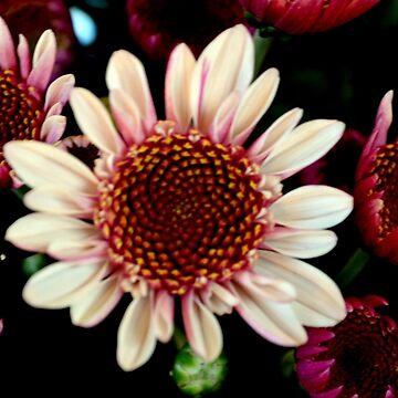 Pink Daisy by moregoodart
