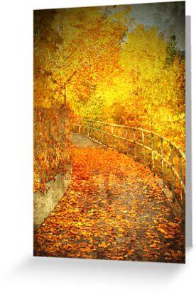 The Autumn Curve by Tara  Turner
