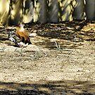 Bird of Prey by Craig Shillington