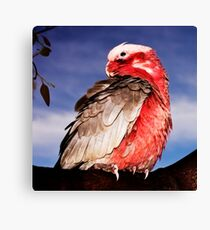 Feathered Friends , Galah Pillow Canvas Print