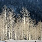 The Birches by Len Bomba
