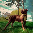 Super Petra the Pit Bull! by Kennsco