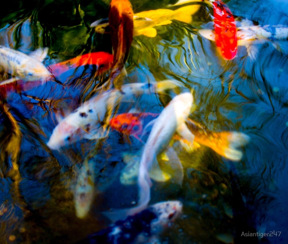 Koi Fish Family by Asiantiger247