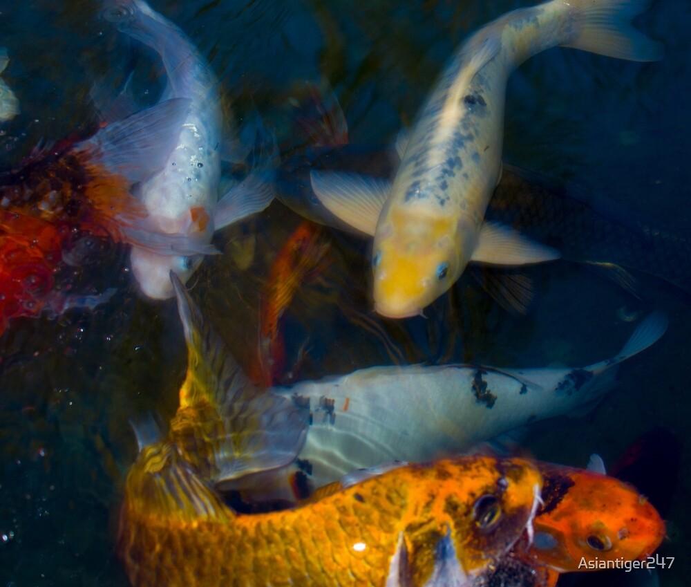 Koi Fish Family by Asiantiger247