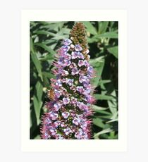 A Single Echium + Bee Art Print