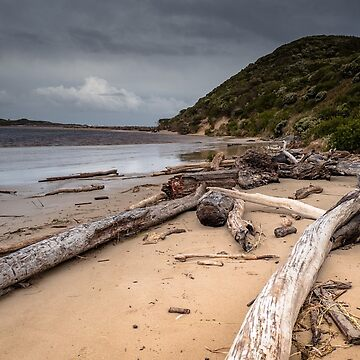 Driftwood at Arthur Beach by colinsart