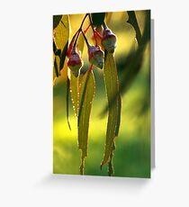 eucalypt Greeting Card