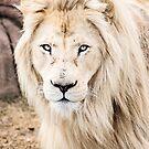 White Lion by Jennifer Stuber