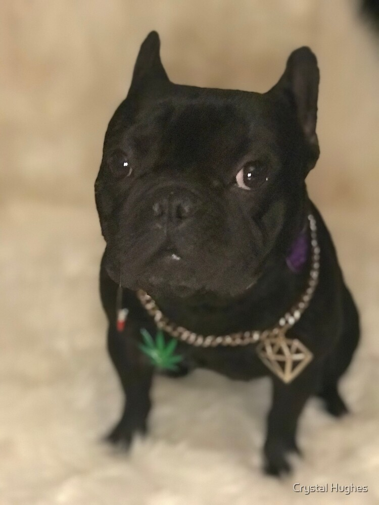 Frenchie Loves Cannabis  by Crystal Hughes