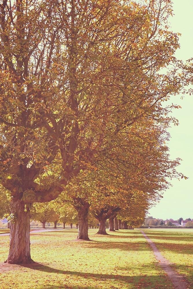 Avenue of Trees by vectorwebstore