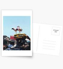 Flamingo - Josh Keyes Postcards