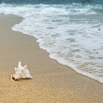 Sea shell by NaCl01