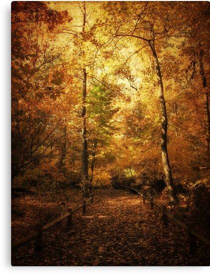Golden Canopy by Jessica Jenney