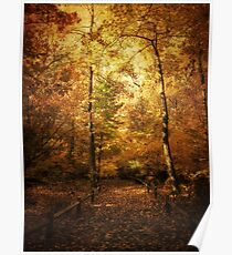 Golden Canopy Poster