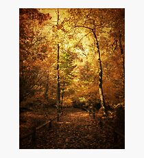 Golden Canopy Photographic Print