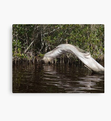 Mangrove Log Canvas Print