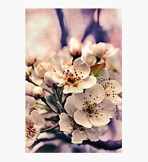 Blossoms at Dusk  Photographic Print