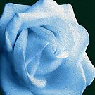 Soft Light Blue Rose Photopainting by hurmerinta