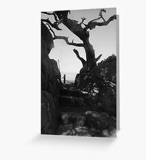Sunlight Through a Cypress Skeleton Greeting Card