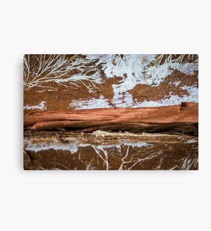 The wood draws trees - Reflecting the Nature it was Canvas Print