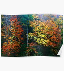 AUTUMN BEECHES Poster