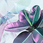 Violette tropische Pflanze, Ficus Elastica von PrintsProject