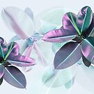 Violet Tropical Plant, Ficus Elastica by PrintsProject