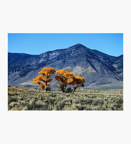 Nevada Gold Photographic Print