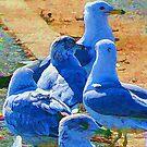 A Leader Among Gulls by DeerPhotoArts