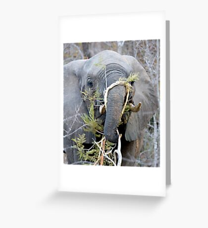 Elephant Fine Dining Greeting Card