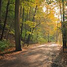 Taughannock Falls Gorge Trail in Autumn by David Lamb