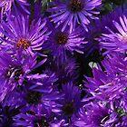 Purple flowers under the sun by jammingene