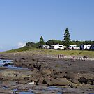 Waterscape: Shellharbour rockpool  by Vanessa Pike-Russell