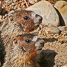 Marmot twins by Rodney55