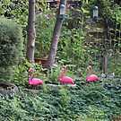 Flamingos by the water by TalBright