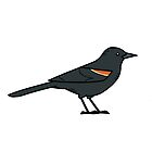 Red-winged Blackbird (male) by KeesKiwi